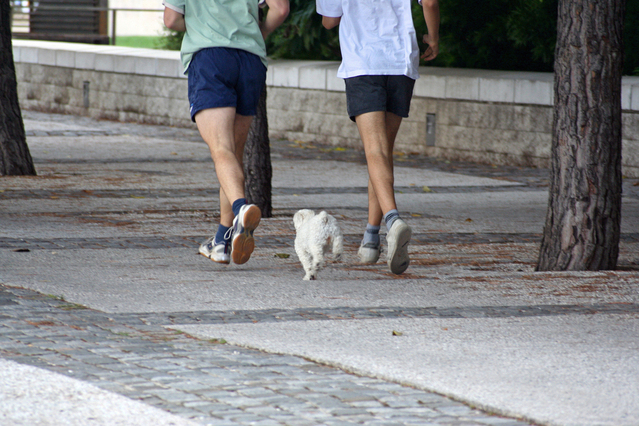 jogging-with-dog-1393943-639x426